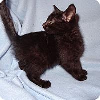 Adopt A Pet :: Austin - Bentonville, AR