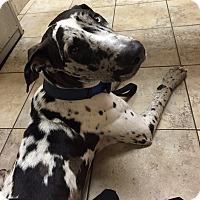 Adopt A Pet :: Jax - Springfield, IL