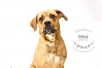 Boxer/Rhodesian Ridgeback Mix Dog for adoption in Kansas City, Missouri - Trina