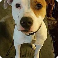 Adopt A Pet :: Diesel - Livonia, MI