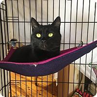 Adopt A Pet :: Krissy - Lunenburg, MA