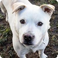Adopt A Pet :: Mowgli - Lockport, NY