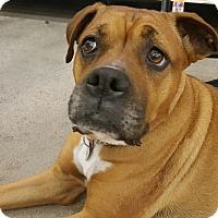 Adopt A Pet :: Desi - Phoenix, AZ