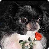 Adopt A Pet :: Lola - Mays Landing, NJ
