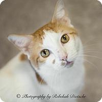 Adopt A Pet :: Vinnie - Byron Center, MI