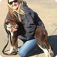 Adopt A Pet :: Poco - Tahlequah, OK
