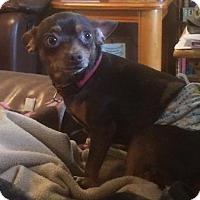 Adopt A Pet :: Charley - Homer, NY