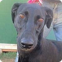 Adopt A Pet :: Sica - Ogden, UT