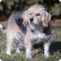 Adopt A Pet :: Dahlia - Ile-Perrot, QC