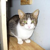 Adopt A Pet :: Ms Stacy - Maryville, TN
