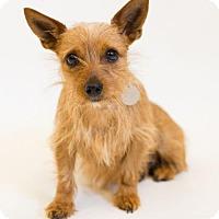 Adopt A Pet :: Jada Joy - Atlanta, GA
