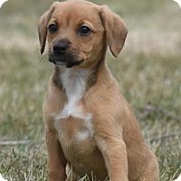 Adopt A Pet :: Lady - Mechanicsburg, PA