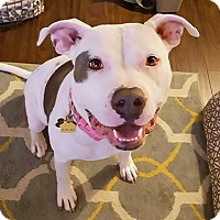 Adopt A Pet :: Gwendolyn - Windsor, VA