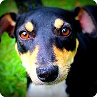 Adopt A Pet :: Lt.Dan - Glastonbury, CT