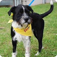 Adopt A Pet :: Turbo - Coeburn, VA