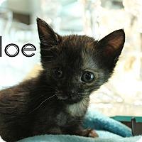 Adopt A Pet :: Aloe - Wichita Falls, TX