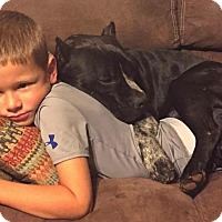 Adopt A Pet :: Axel - Durham, NC