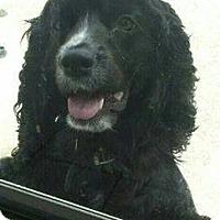 Adopt A Pet :: Marley - Strongsville, OH