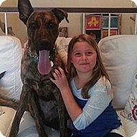 Adopt A Pet :: Samson - Santa Monica, CA