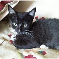 Adopt A Pet :: Winifred - Hayward, CA