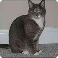 Adopt A Pet :: Silba - Greenville, SC