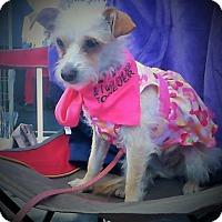 Adopt A Pet :: MITZY - Higley, AZ