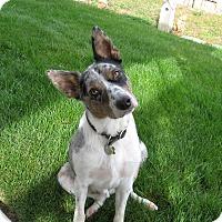 Adopt A Pet :: JOE **adoption pending!** - Nampa, ID