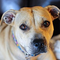 Adopt A Pet :: Sue Ellen - Fort Lauderdale, FL