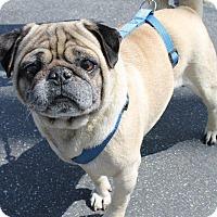 Adopt A Pet :: Mookie - Gardena, CA