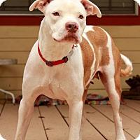 Adopt A Pet :: Savannah - North Vancouver, BC
