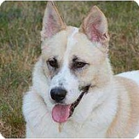 Adopt A Pet :: Ordie - FOSTER NEEDED - Seattle, WA