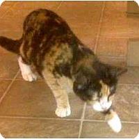 Adopt A Pet :: Siren - Summerville, SC