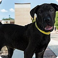 Adopt A Pet :: Jewell - Henderson, NC