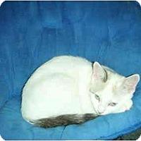 Adopt A Pet :: Lucky - Washington Terrace, UT
