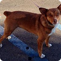Adopt A Pet :: Calypso - Fowler, CA