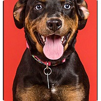 Adopt A Pet :: Raven - Owensboro, KY