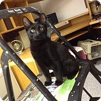 Adopt A Pet :: Moby - Byron Center, MI