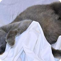 Adopt A Pet :: Colema - Bowling Green, VA
