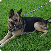 Adopt A Pet :: Heinrich - Houston, TX