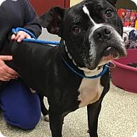 Adopt A Pet :: Sleepa - Cranston, RI