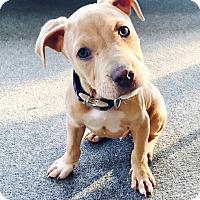 Adopt A Pet :: Mofro - Atlanta, GA