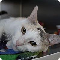 Adopt A Pet :: Helena - Sarasota, FL