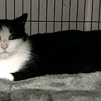 Adopt A Pet :: KiKi - Saginaw, MI