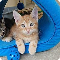 Adopt A Pet :: Calzone - Umatilla, FL