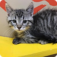 Adopt A Pet :: Parker - Maryville, MO
