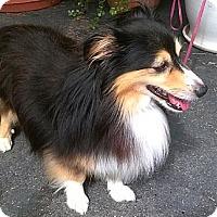 Adopt A Pet :: Nelson - La Habra, CA