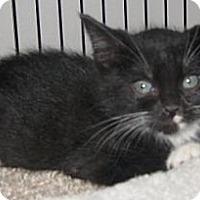 Adopt A Pet :: Tazz - Dallas, TX