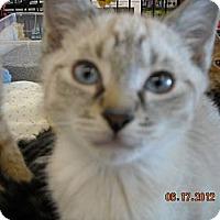 Adopt A Pet :: Colton - Riverside, RI