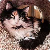 Adopt A Pet :: Persephone - Byron Center, MI