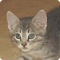 Adopt A Pet :: JOEY - 2013 - Hamilton, NJ